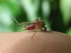 Fever Grips Delhi 146 Cases Of Chikungunya 87 Dengue Reported So Far