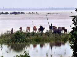 Floods Wreak Havoc Assam Animals Scurry Higher Ground Kaziranga
