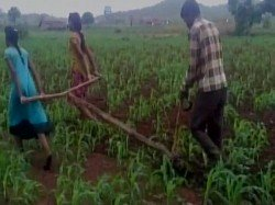 Madhya Pradesh Due To Financial Crisis Farmer Forced To Use Daughters To Plough Filed