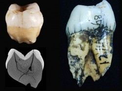 Modern Humans Active 20000 Years Earlier Than Thought Study