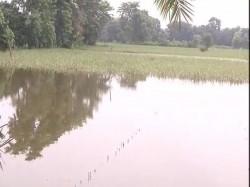 In Bihar Floods Farmers Lose Crops Homes Stare At Bleak F