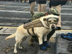 Meet Frida The Dog Who Has Saved Dozens Lives After Mexico Earthquake