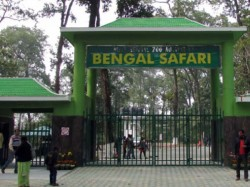 Animals Arrive At The Bengal Safari Park From Jamshedpur And Delhi