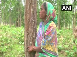 Odisha S Tree Hugger Guards Forest Once Protected Her Dea