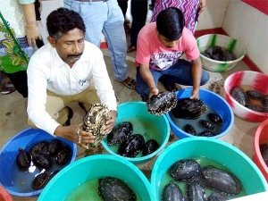 India sees wildlife smuggling rise by 121 per cent to China