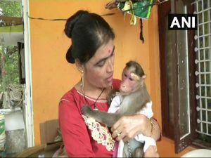 Karnataka cop rescues monkey