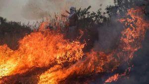 Wildfires raging across Amazon rainfores