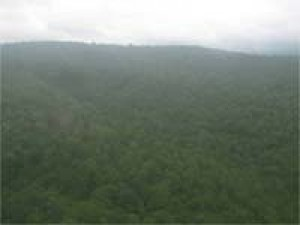 Participatory Forest Management Tribals Self Help.html