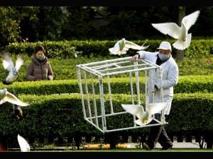 Feeding Birds May Spread Diseases