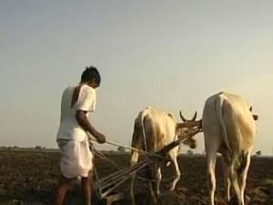 Vidarbha Farmers Demand Time Bound Budgetary Allocations
