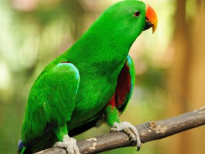 Firefighters Rush On Receiving Alarm But See Parrot Making Alarm Sound