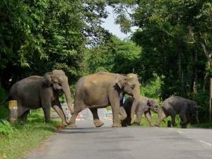 Elephant Herd Creates Panic In Valparai