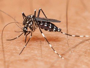 Nine More Persons Test Positive Dengue Indore