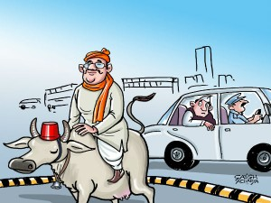 Netas It S Not You Cows Are India S New Vips