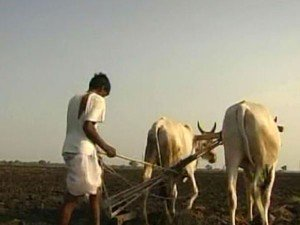Too Many Choices Making Decision Making Difficult Indian Farmers Says A Scientist