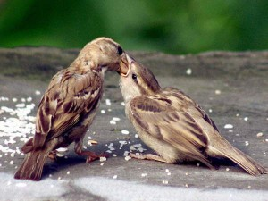 World Sparrow Day Little Known Facts About Sparrows That Will Surprise You