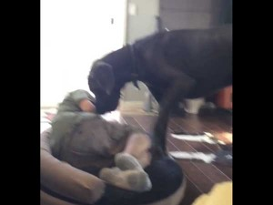 Video Dog Asks Owner To Leave Bed