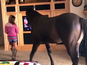 Video Horse Enters House Casually Walks Around