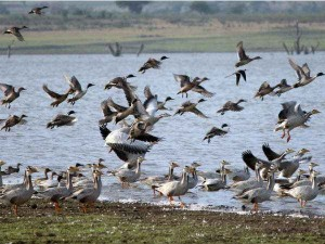 How Bird Watching Is Helping Conserve Small Species In Karnataka