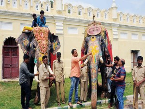 Colours Riot On Dasara Elephants