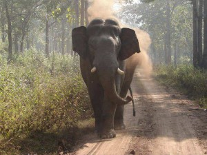 West Bengal Little Girl Falls From Scooter Wild Elephant Shields Her From Own Herd
