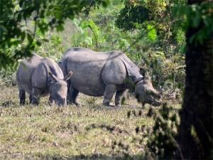 Human Appetite Pushing Big Animals At Risk Of Extinction