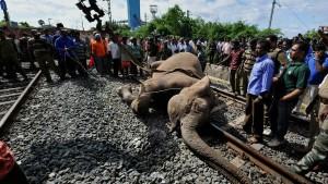 Plan Bee How The Indian Railways Is Preventing Elephant Deaths On Tracks