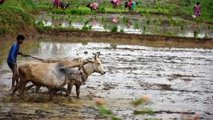 Agriculture Activities Industries In Rural Areas To Function Post Apr 20 Govt Guidelines