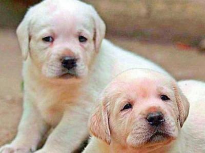Kolkata shame: 16 puppies killed ruthles