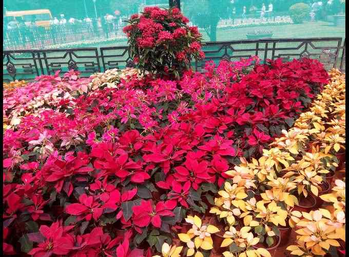 Lalbagh Flower Show-2018