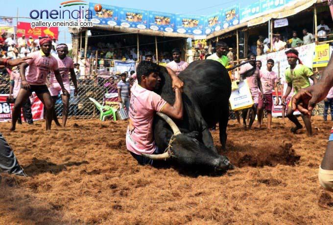 Jallikattu Held At Palamedu In Madurai