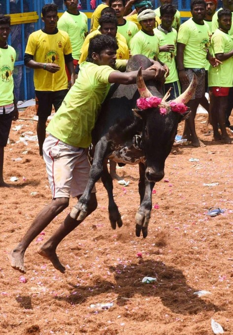 Photo Gallery: Viralimalai Jallikattu