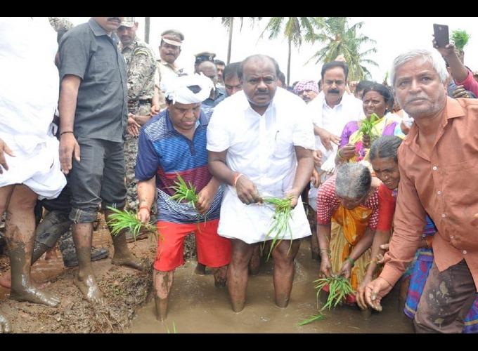 Kumaraswamy Plant Rice Paddy Today In Mandya District Sitapur