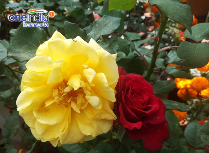 Lalbagh Republic Day Flower Show 2019