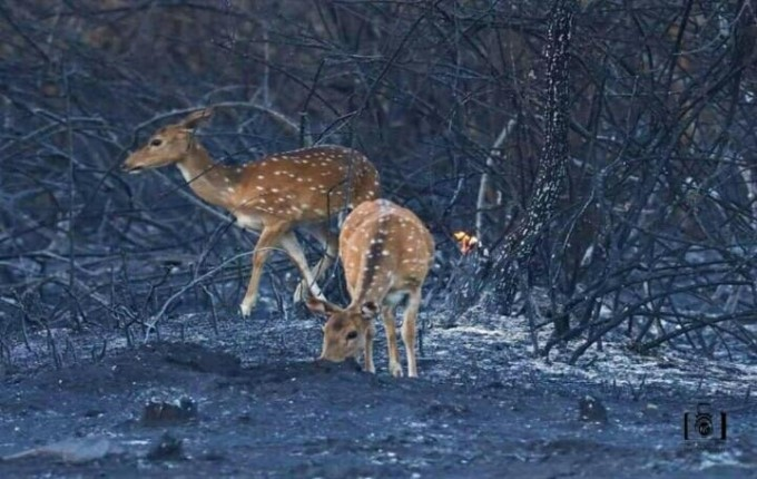 Major Fire Breaks Out At Bandipur Tiger Reserve In Karnataka