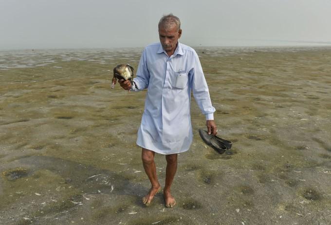 Thousands Of Migratory Birds Found Dead In Rajasthan's Sambhar Lake
