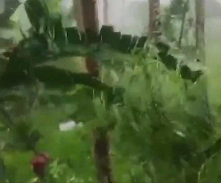 कोरोना महामारी के बीच फिलीपींस में Vongfong तूफान ने मचाई तबाही