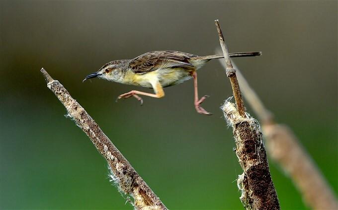 ఫోటోలు: చెన్నైలోని పెరుంబాక్కంలో కొలువుదీరిన రకరకాల పక్షులు