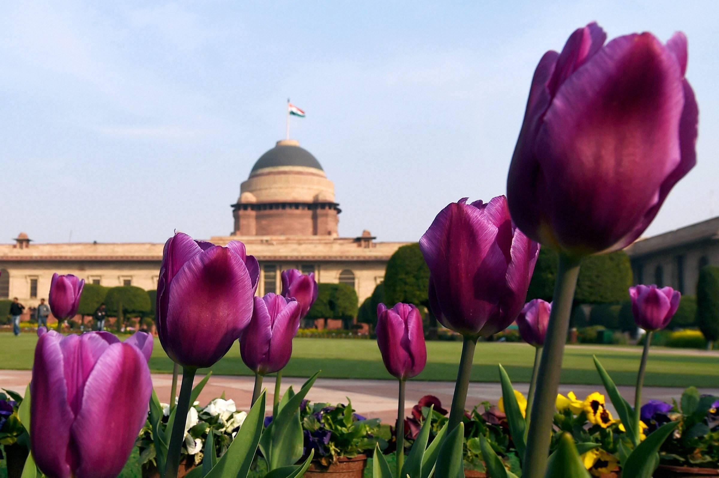 देखें विश्व प्रसिद्ध  'मुगल गार्डन' की खूबसूरत तस्वीरें