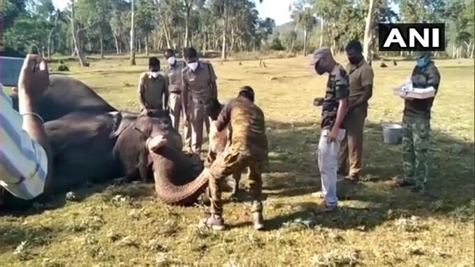 कोरोना टेस्ट के लिए कैसे लिया जा रहा है हाथियों की सूड़ से सैंपल