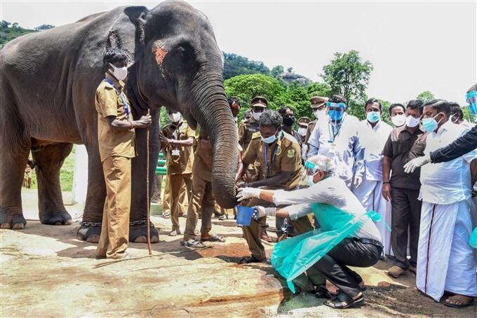 Veterinary Doctors Collect Sample For Covid-19 Testing From Animals In Tamil Nadu