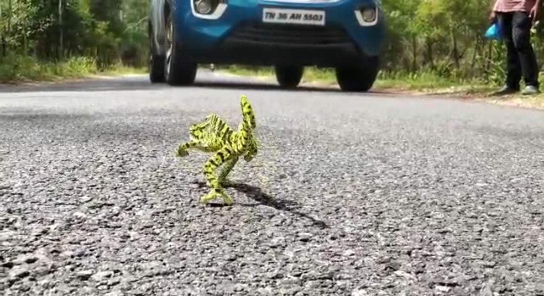 காரை நிறுத்திய பச்சோந்தி.. உஷாரா வண்டிகளை ஓட்டுங்க.. வனத்துறை வார்னிங்!