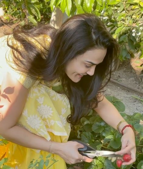 फिल्म छोड़ खेतों में काम कर रही है एक्ट्रेस प्रीति जिंटा, शेयर की तस्वीरें