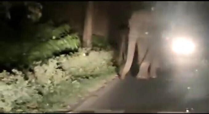 Photos: ತಮಿಳುನಾಡಿನಲ್ಲಿ ತಡರಾತ್ರಿ ಕಾರಿನ ಮೇಲೆ ಆನೆಗಳ ದಾಳಿ ಹೇಗಿತ್ತು ನೋಡಿ