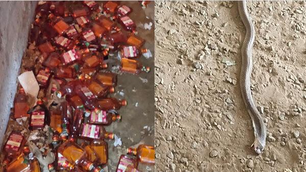 ప్రభుత్వ మద్యం షాపులో పాము కలకలం: తనిఖీల నిమిత్తం వచ్చిన అధికారిణి పై కాటు(ఫొటోలు)