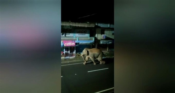 Wild Elephant Try To Attack Public In Gudalur